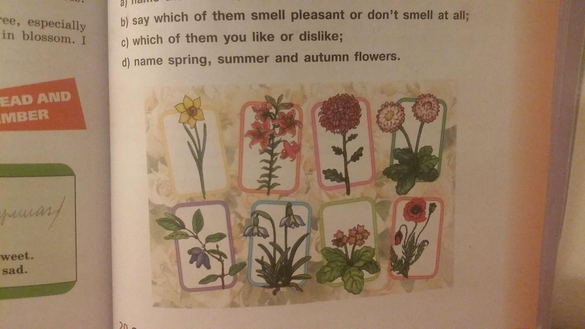 Помогите срочно : Посмотрите на фотографии и : а) наименование цветы B) сказать, какая из них запах приятным или не пахнут вообще ; в) какие из них вам нравится или не нравится ; г) наименование весен?