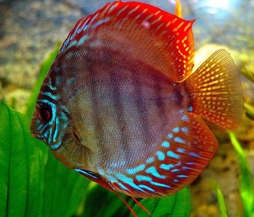Что это за рыбы, какая из них пресноводная, а какая морская?