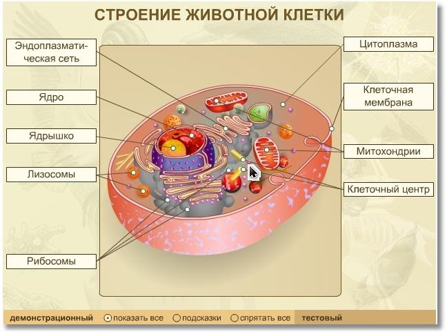 картинки строение клеток животного рецепт