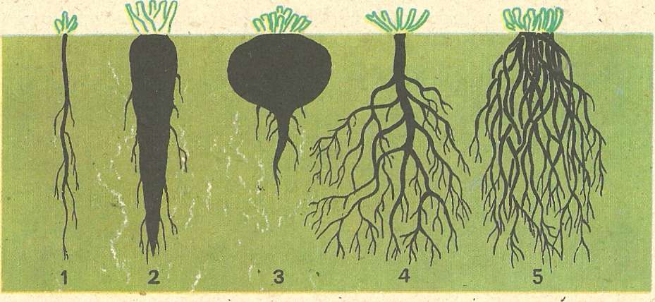картинки на тему корни можно сказать