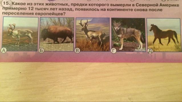 Какое из этих животных, предки которого вымерли в северной Америке примерно 12тыс?