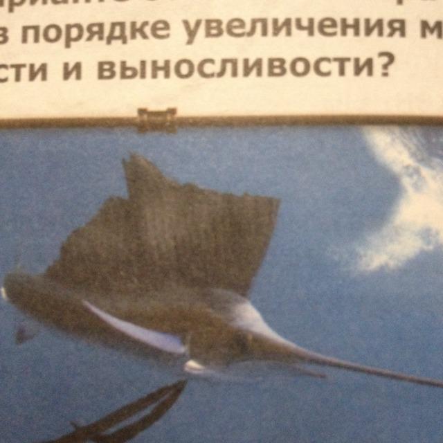 Как называется эта рыба?