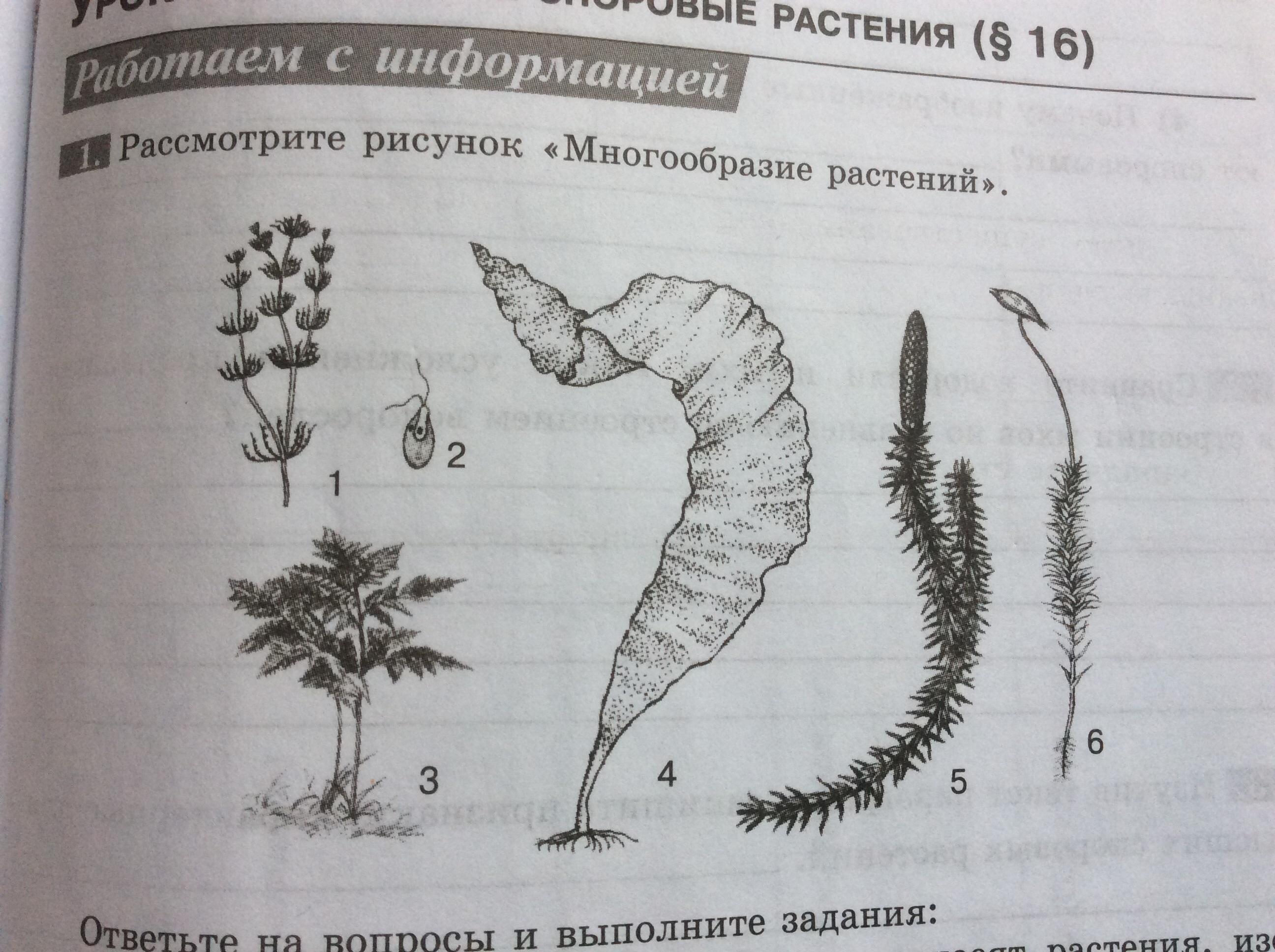 Даю 20 балловПомогите пожалуйста, биология 5 класс1 - картинка, 2 - заданиеСрочно?