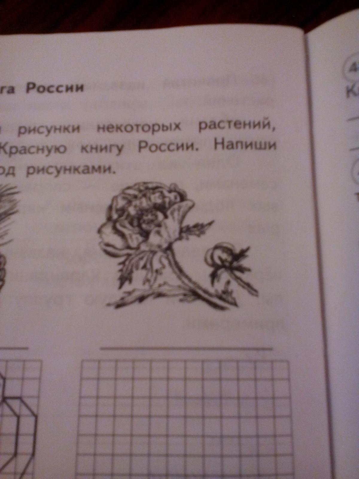 Что за растениезанесено в красную книгу?