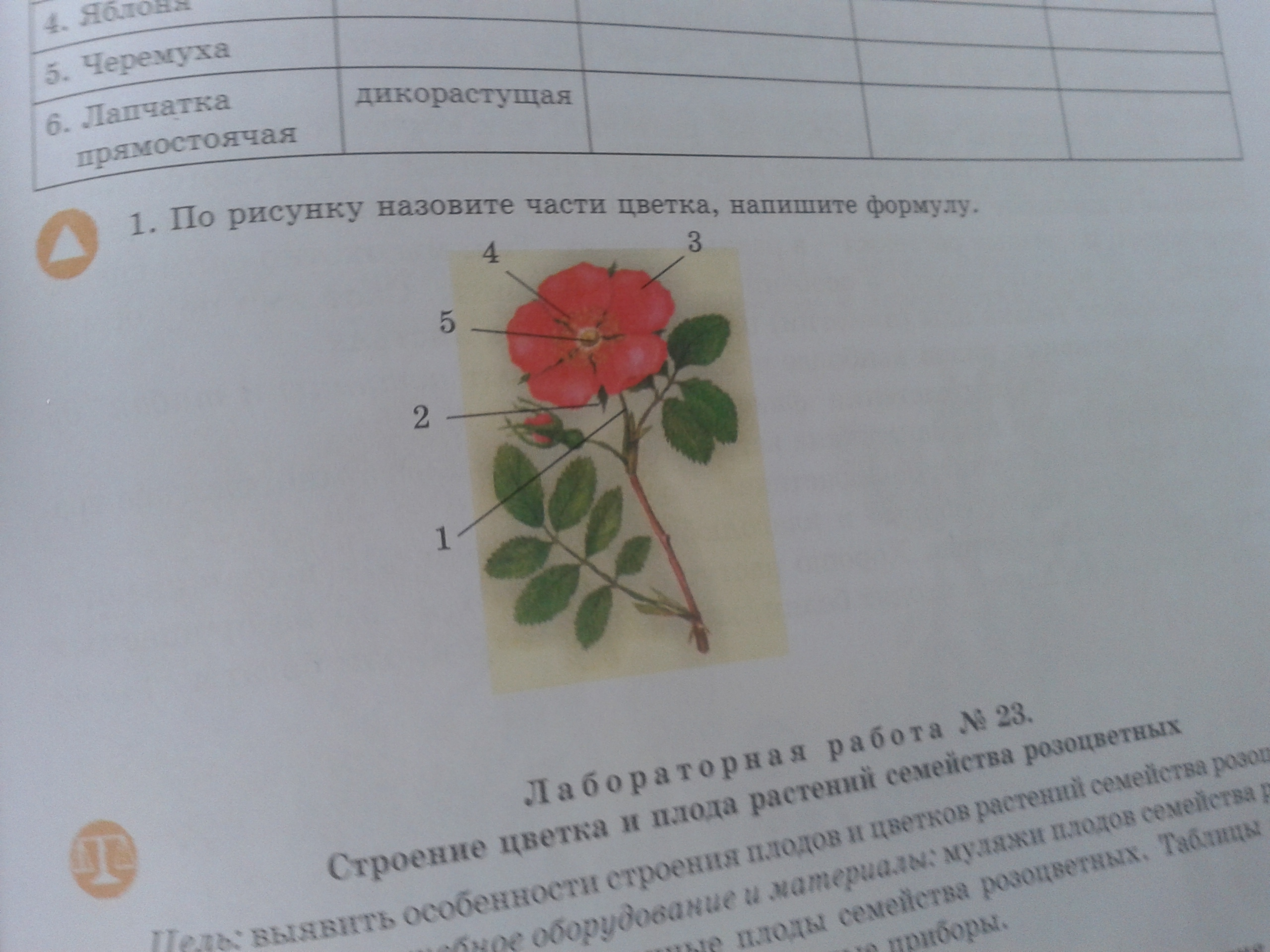 Биология?