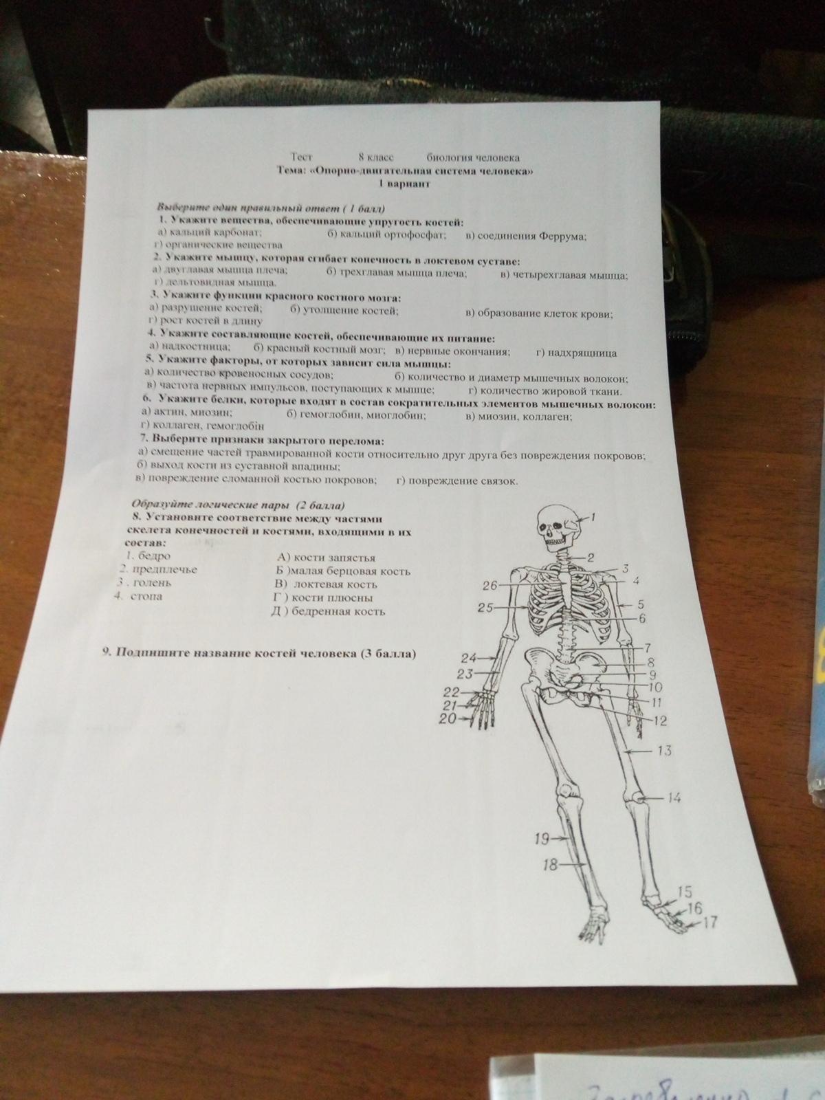 Подпишите название костей и задание?